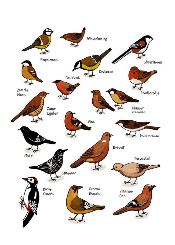 Inne-Haine-Vierves-vogels-jpg